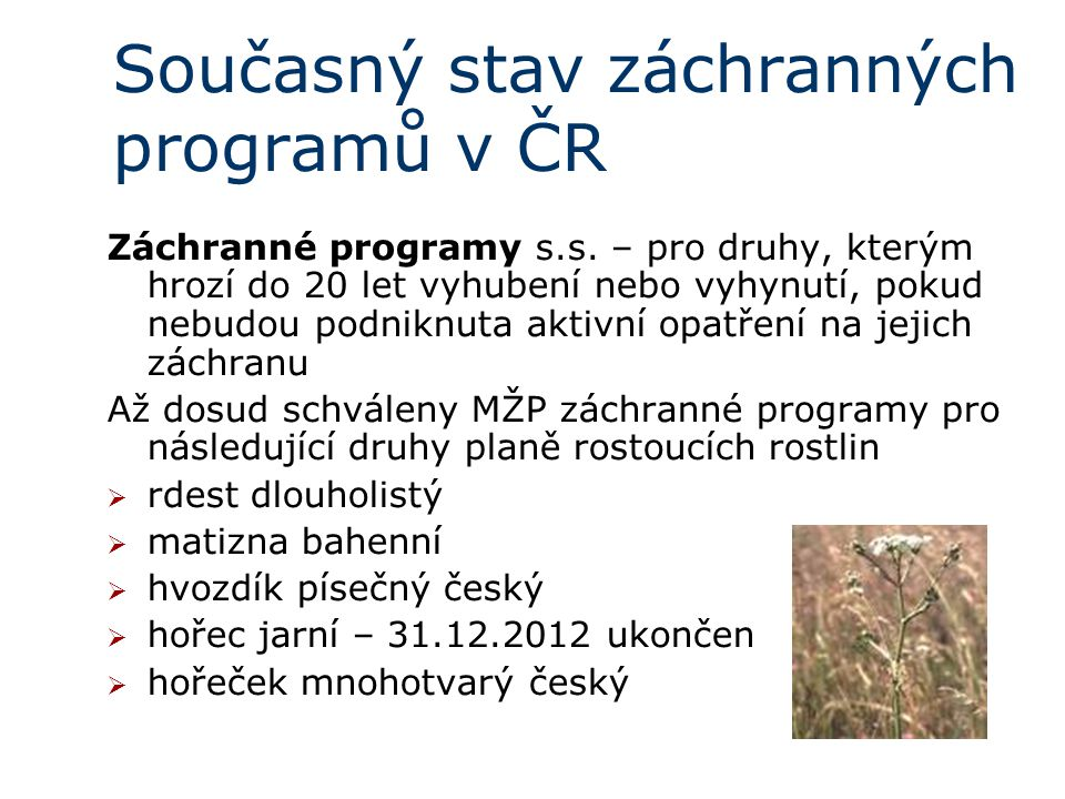 Současný stav záchranných programů v ČR Záchranné programy s.s.