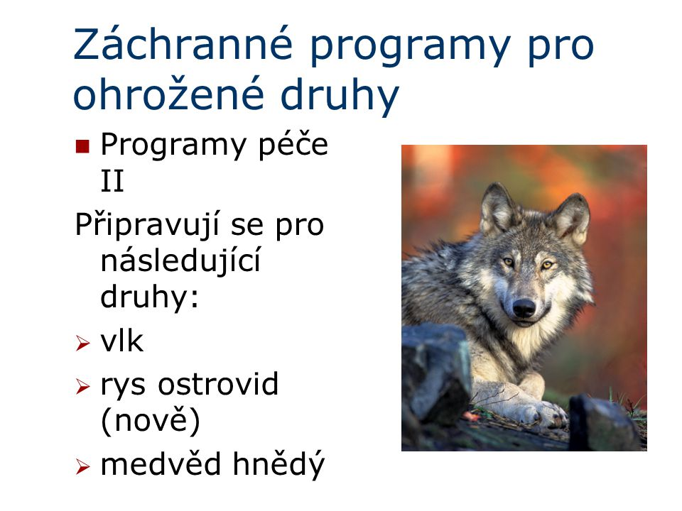 Záchranné programy pro ohrožené druhy Programy péče II Připravují se pro následující druhy:  vlk  rys ostrovid (nově)  medvěd hnědý
