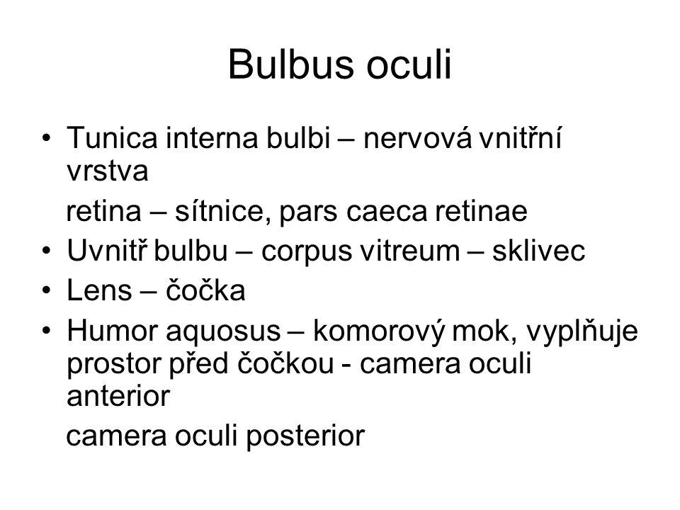 Bulbus oculi Tunica interna bulbi – nervová vnitřní vrstva retina – sítnice, pars caeca retinae Uvnitř bulbu – corpus vitreum – sklivec Lens – čočka H