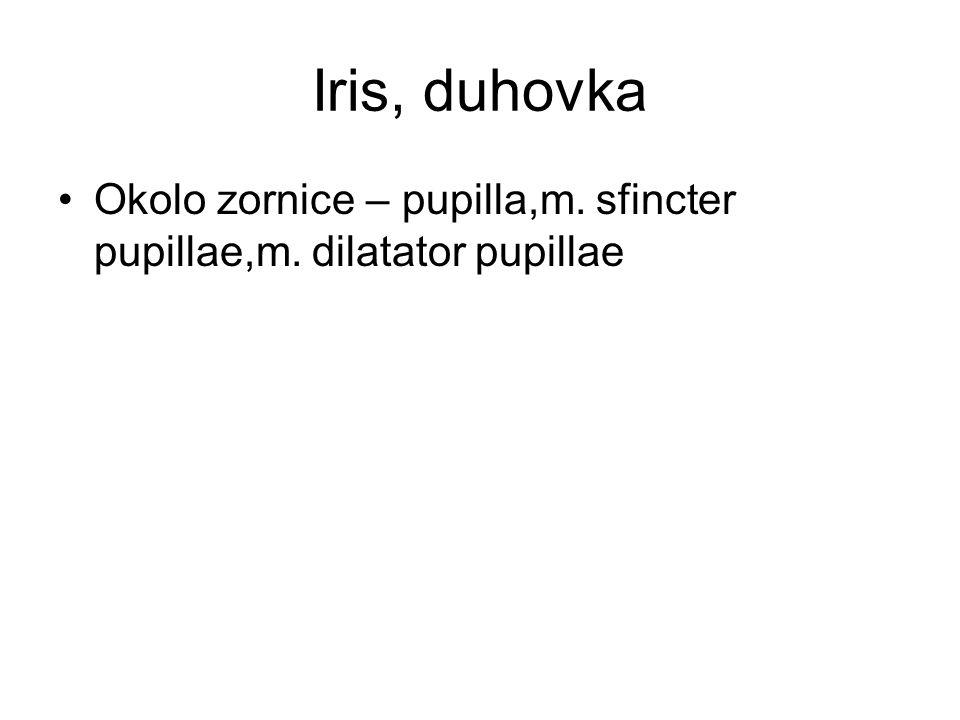 Iris, duhovka Okolo zornice – pupilla,m. sfincter pupillae,m. dilatator pupillae