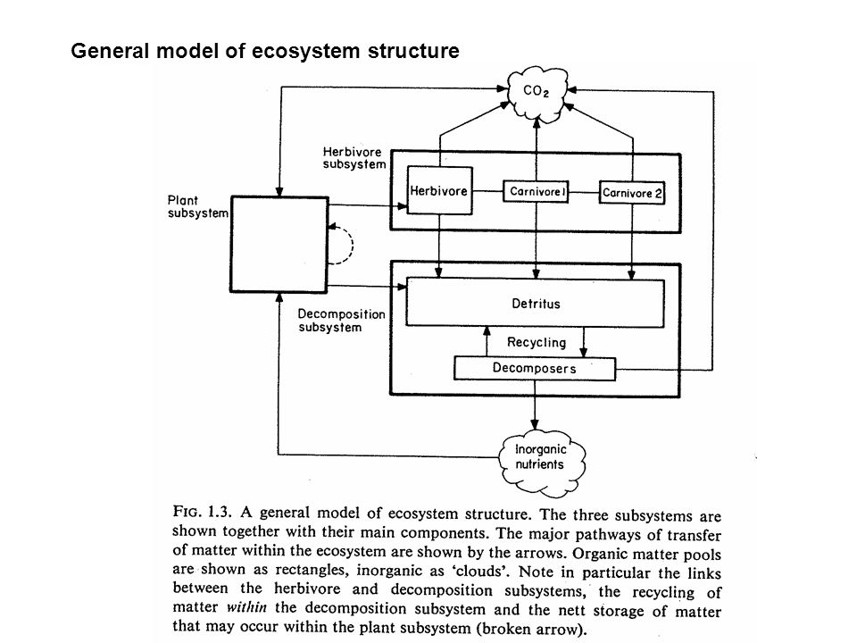 General model of ecosystem structure