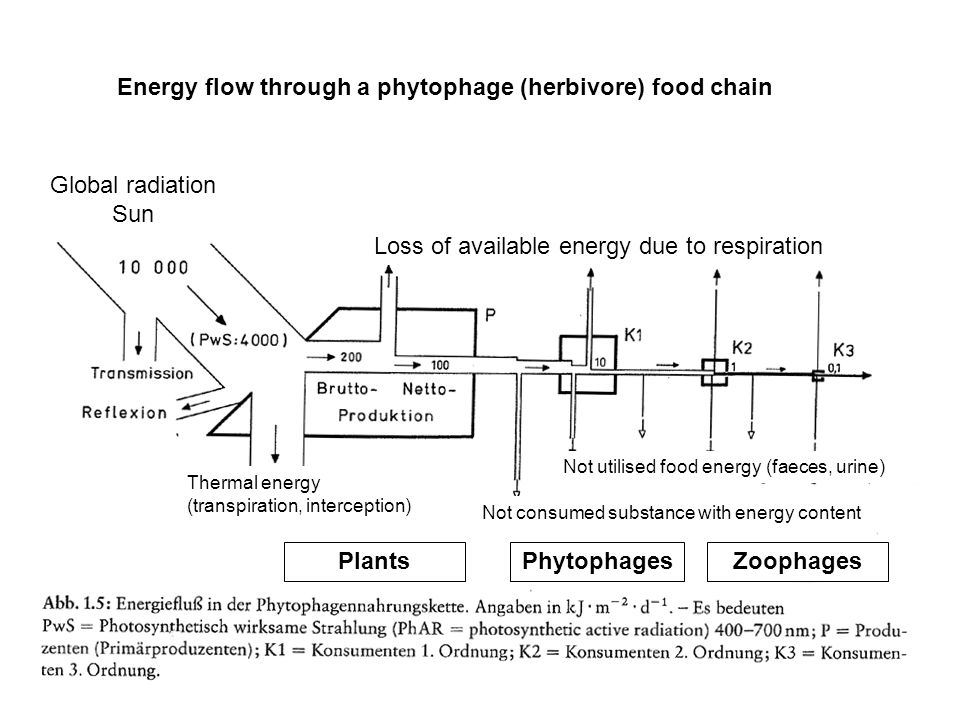 Loss of available energy due to respiration Not utilised food energy (faeces, urine) Not consumed substance with energy content Thermal energy (transpiration, interception) Global radiation Sun PlantsPhytophagesZoophages Energy flow through a phytophage (herbivore) food chain