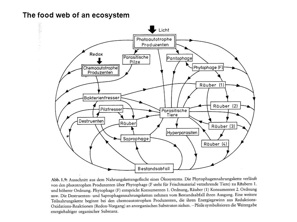The food web in soil
