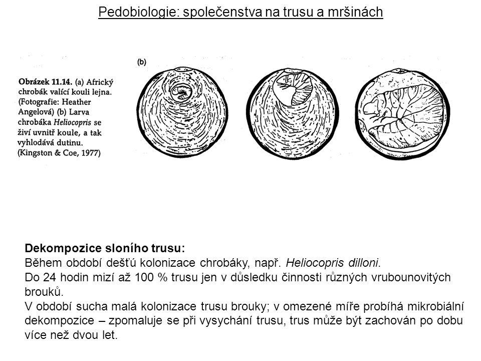 Dekompozice sloního trusu: Během období dešťú kolonizace chrobáky, např. Heliocopris dilloni. Do 24 hodin mizí až 100 % trusu jen v důsledku činnosti