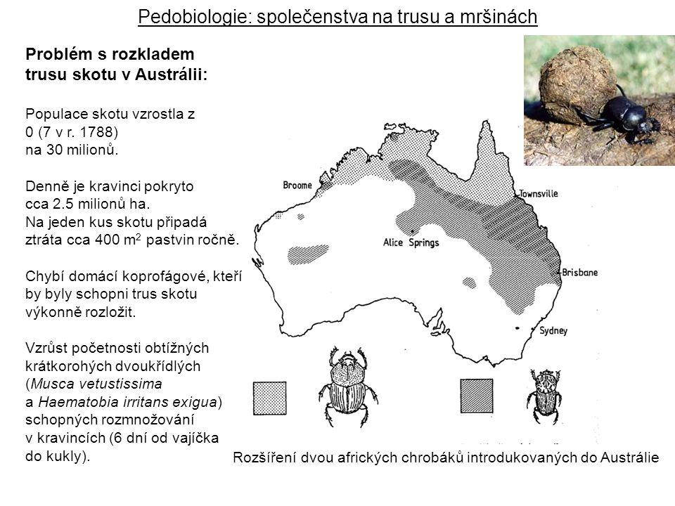 Rozšíření dvou afrických chrobáků introdukovaných do Austrálie Problém s rozkladem trusu skotu v Austrálii: Populace skotu vzrostla z 0 (7 v r. 1788)