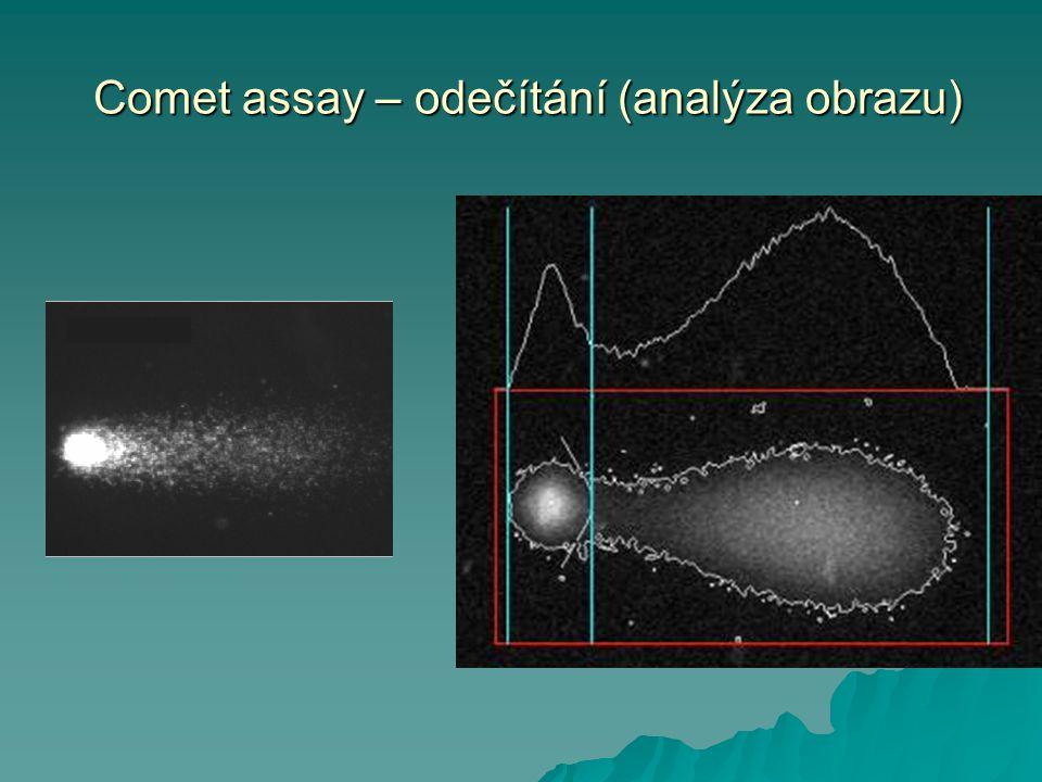 Comet assay – odečítání (analýza obrazu) Comet assay – odečítání (analýza obrazu)