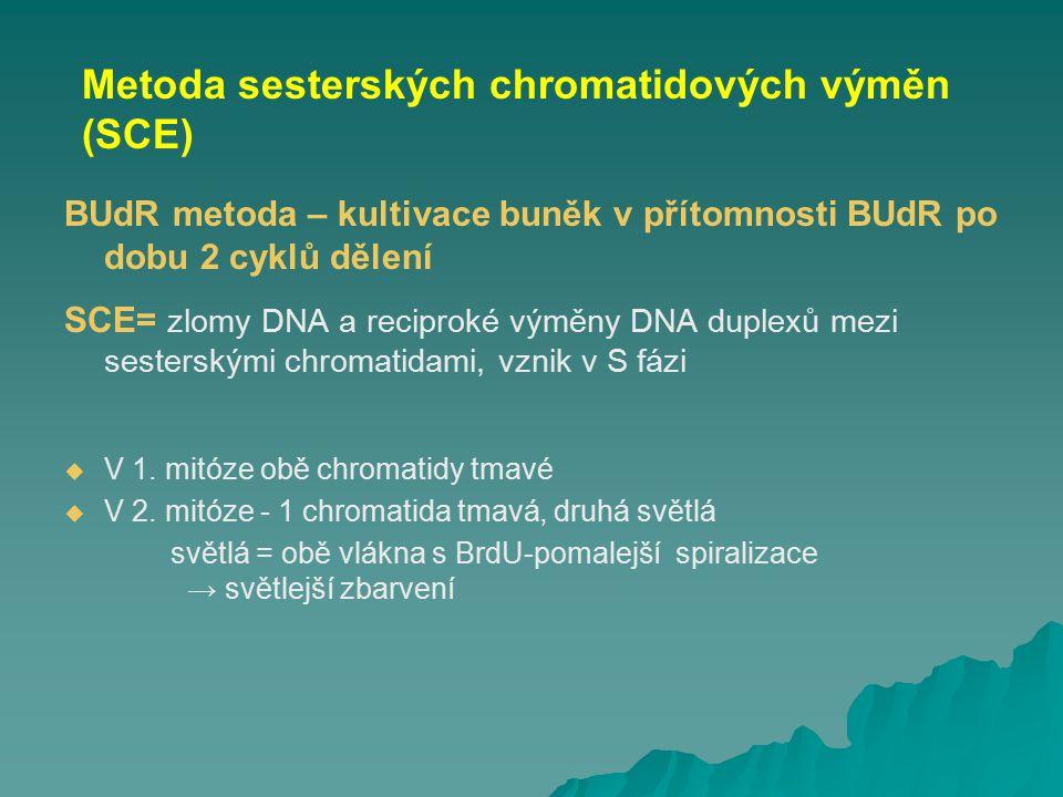 BUdR metoda – kultivace buněk v přítomnosti BUdR po dobu 2 cyklů dělení SCE= zlomy DNA a reciproké výměny DNA duplexů mezi sesterskými chromatidami, v