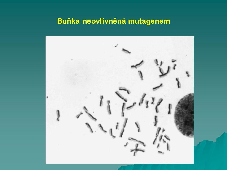 Buňka neovlivněná mutagenem