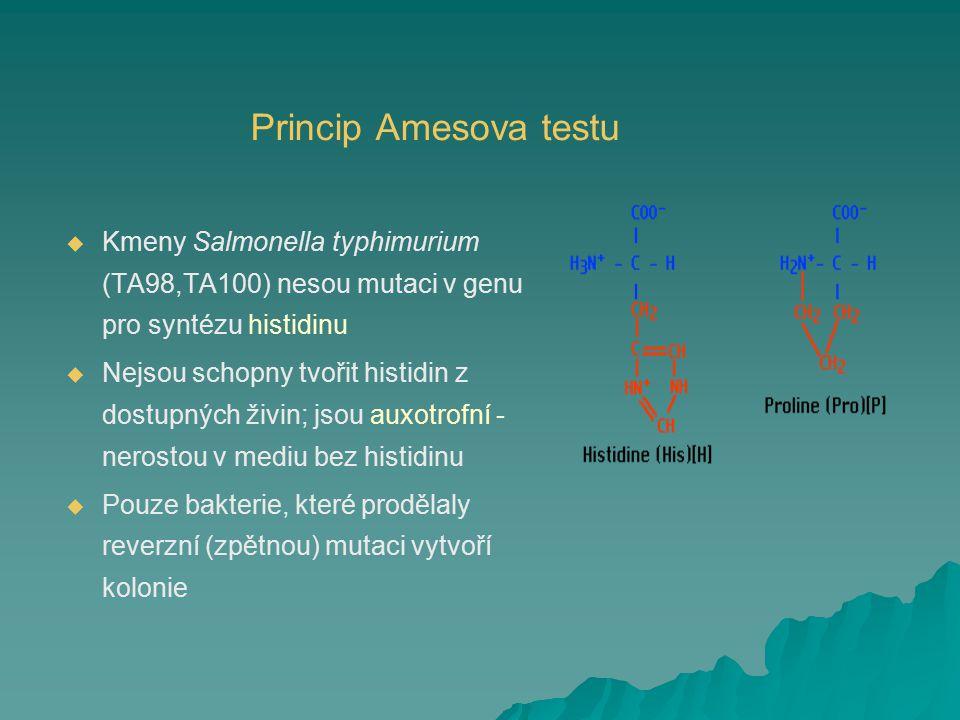 Princip Amesova testu   Kmeny Salmonella typhimurium (TA98,TA100) nesou mutaci v genu pro syntézu histidinu   Nejsou schopny tvořit histidin z dos