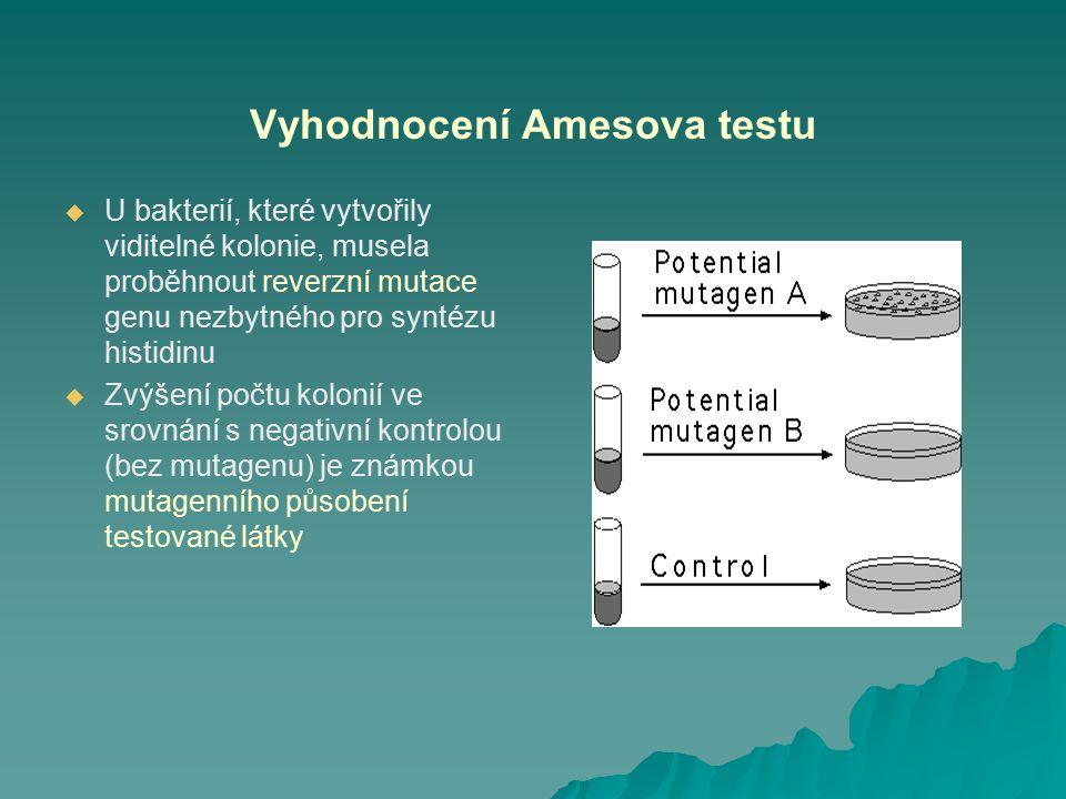 Vyhodnocení Amesova testu   U bakterií, které vytvořily viditelné kolonie, musela proběhnout reverzní mutace genu nezbytného pro syntézu histidinu 