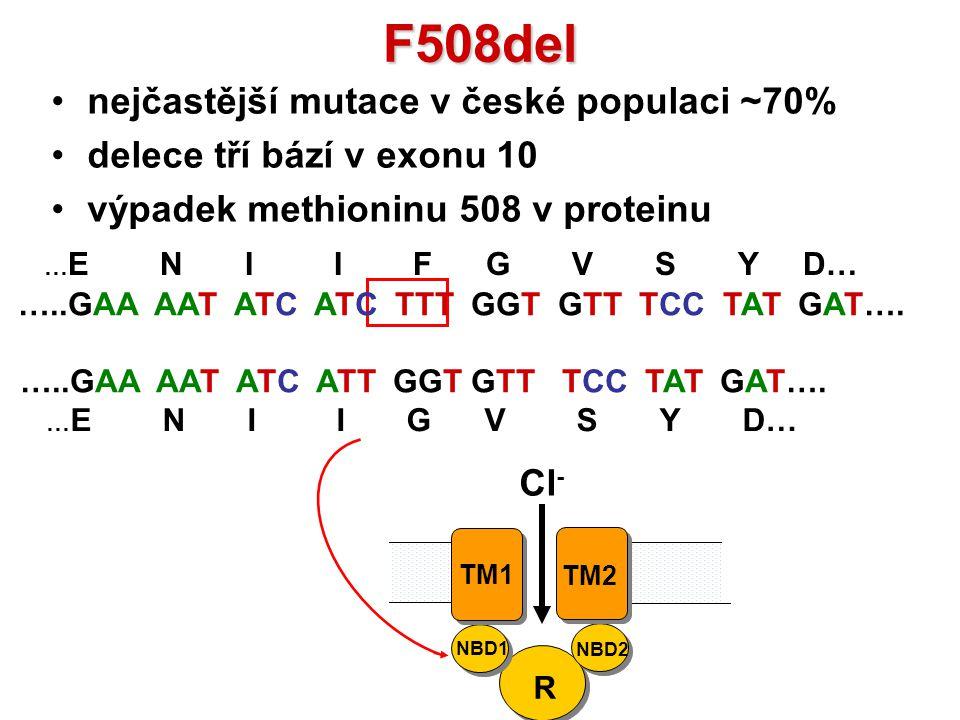 F508del nejčastější mutace v české populaci ~70% delece tří bází v exonu 10 výpadek methioninu 508 v proteinu R NBD1 NBD2 TM1 TM2 Cl - … E N I I F G V