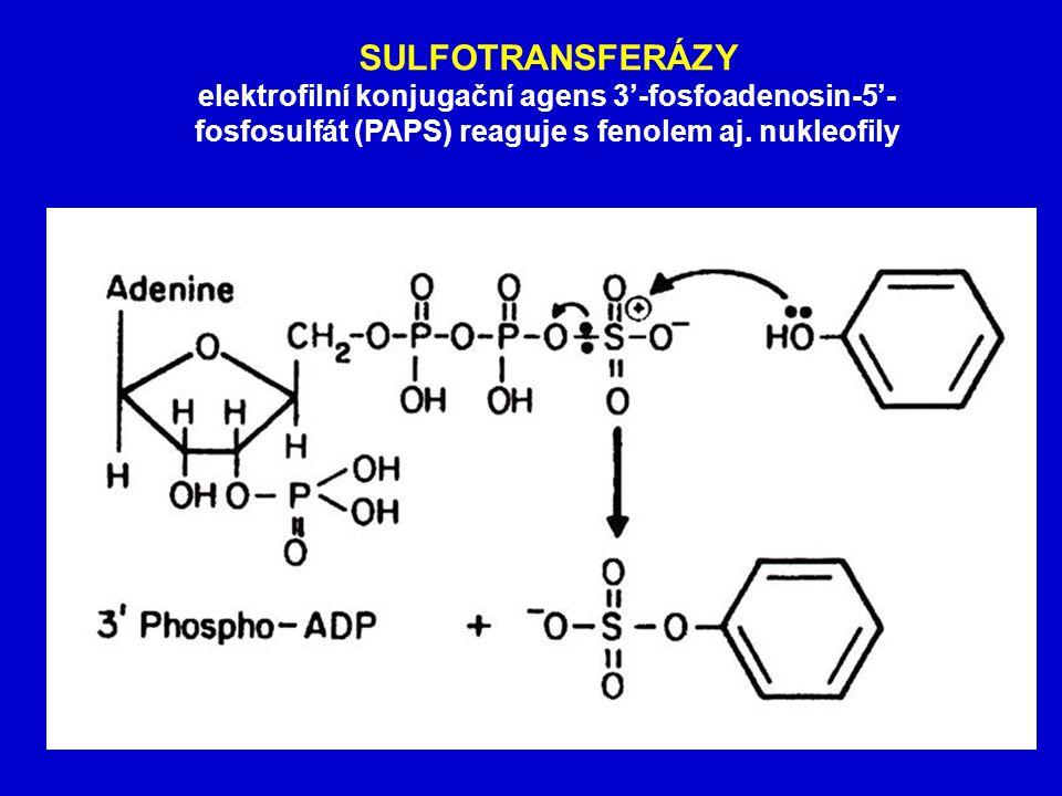 SULFOTRANSFERÁZY elektrofilní konjugační agens 3'-fosfoadenosin-5'- fosfosulfát (PAPS) reaguje s fenolem aj.