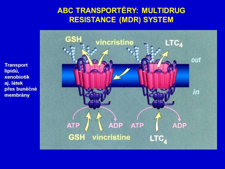 ABC TRANSPORTÉRY: MULTIDRUG RESISTANCE (MDR) SYSTEM Transport lipidů, xenobiotik aj.