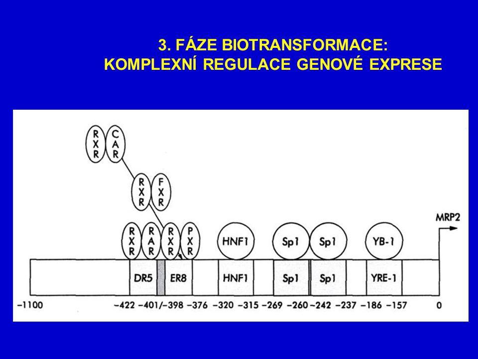 3. FÁZE BIOTRANSFORMACE: KOMPLEXNÍ REGULACE GENOVÉ EXPRESE