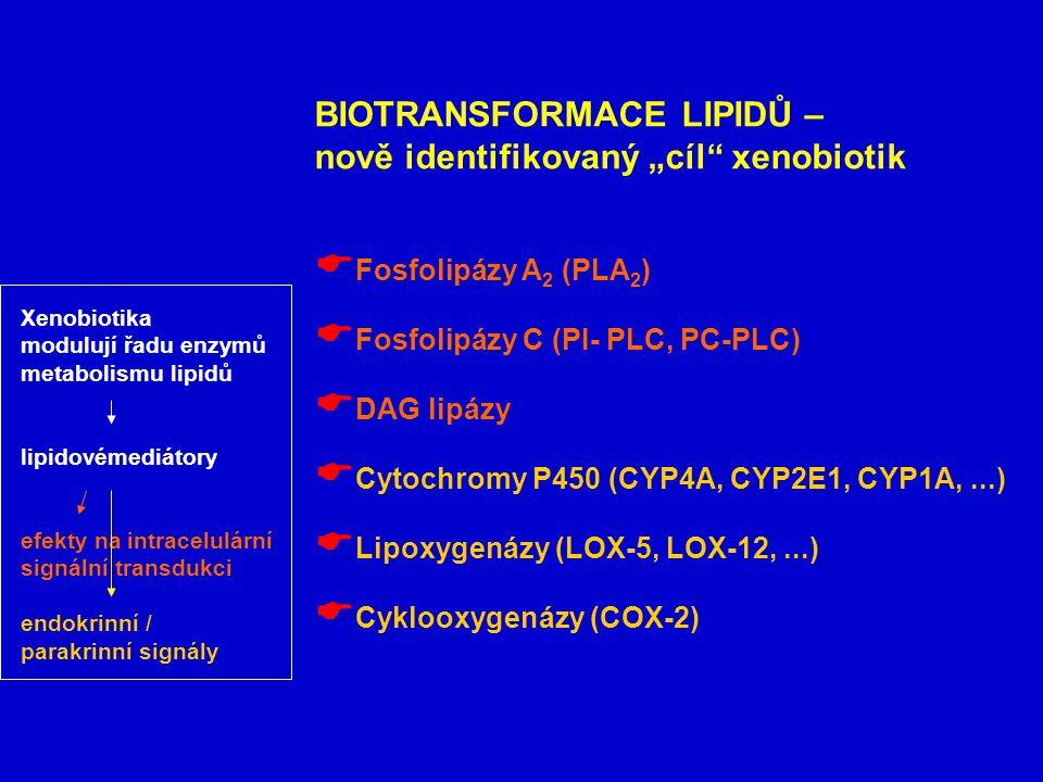 """BIOTRANSFORMACE LIPIDŮ – nově identifikovaný """"cíl xenobiotik  Fosfolipázy A 2 (PLA 2 )  Fosfolipázy C (PI- PLC, PC-PLC)  DAG lipázy  Cytochromy P450 (CYP4A, CYP2E1, CYP1A,...)  Lipoxygenázy (LOX-5, LOX-12,...)  Cyklooxygenázy (COX-2) Xenobiotika modulují řadu enzymů metabolismu lipidů lipidovémediátory efekty na intracelulární signální transdukci endokrinní / parakrinní signály"""