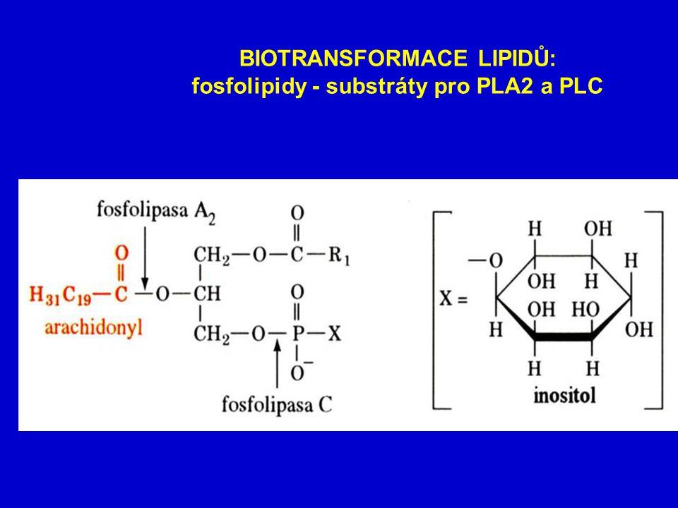BIOTRANSFORMACE LIPIDŮ: fosfolipidy - substráty pro PLA2 a PLC