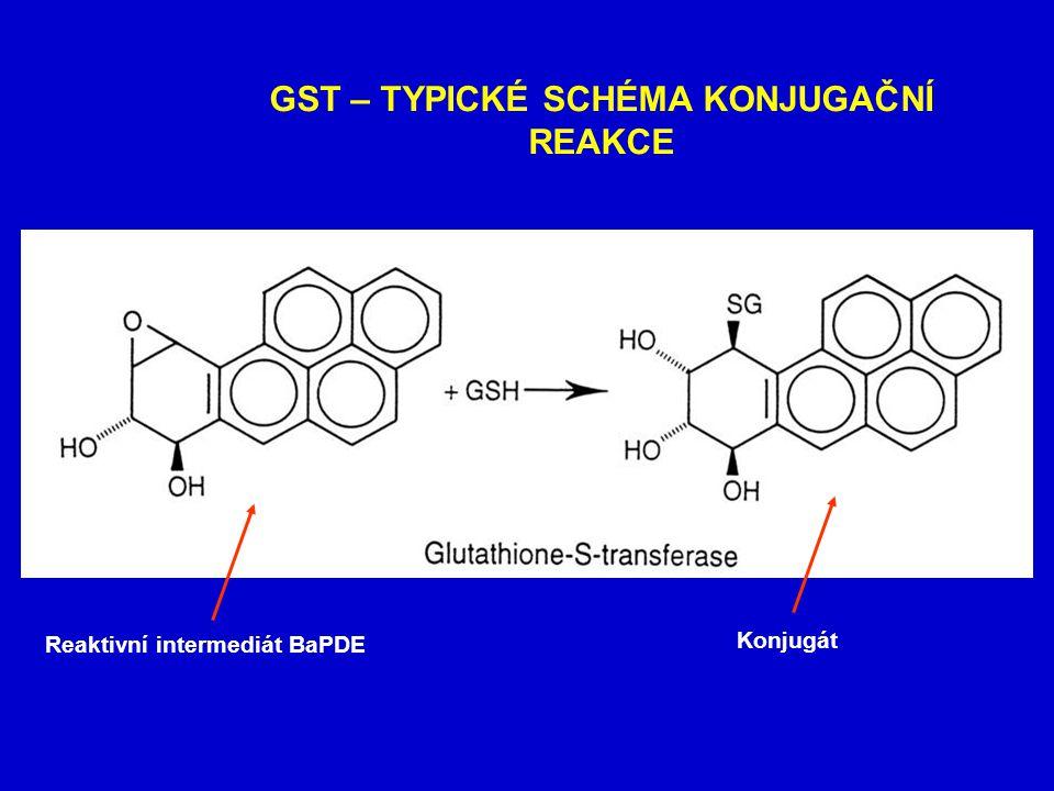 ISOENZYMY GST Funkční GST enzymy jsou dimery membránově vázaný GST