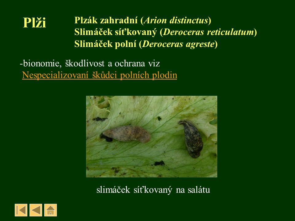 Plži Plzák zahradní (Arion distinctus) Slimáček síťkovaný (Deroceras reticulatum) Slimáček polní (Deroceras agreste) -bionomie, škodlivost a ochrana v
