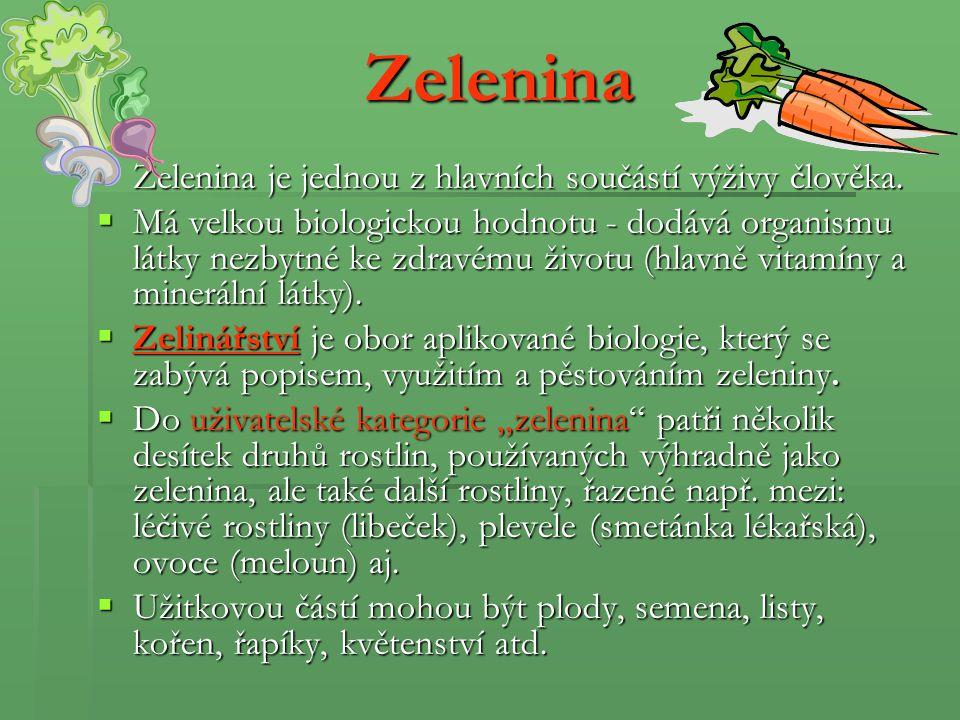 Salát hlávkový (Lactuca sativa) Užívaná část: listy