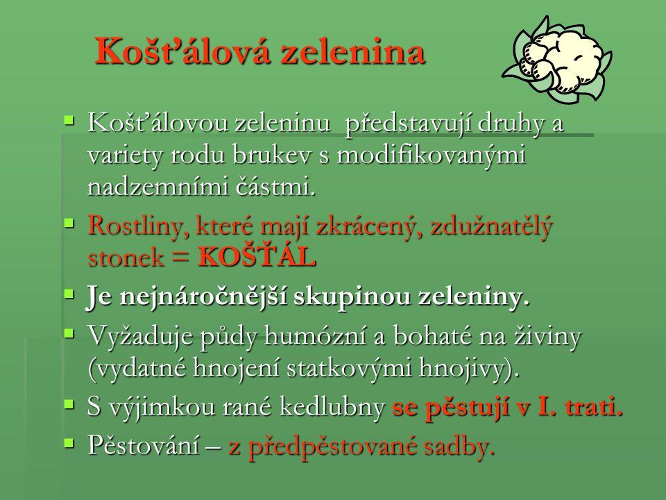 Brokolice (Brassica oleracea) Užívaná část: Růžice poupat