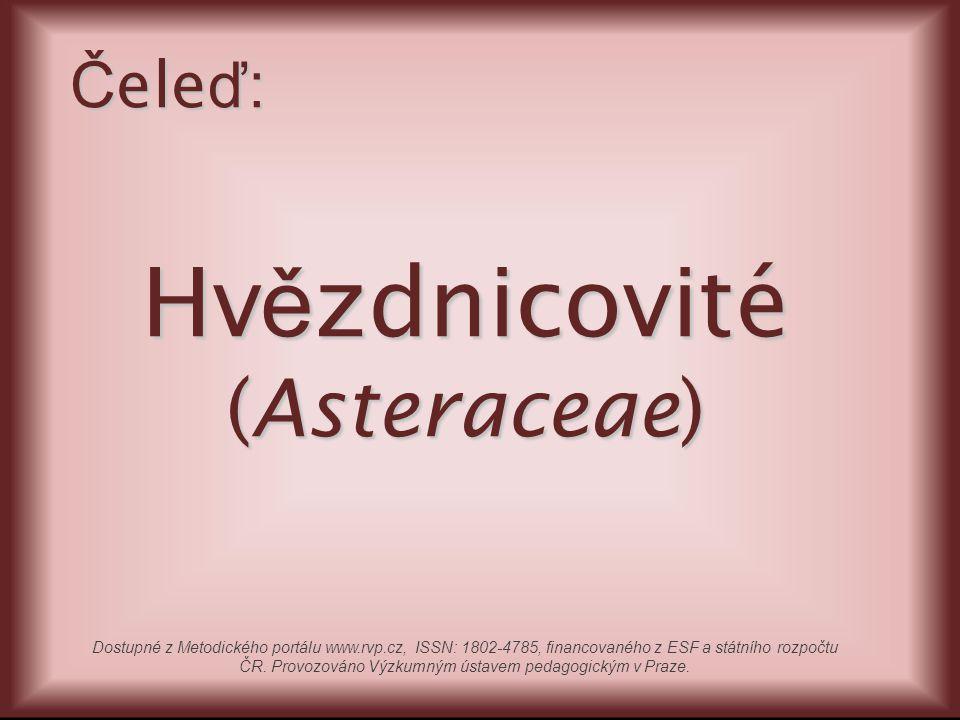 Hv ě zdnicovité (Asteraceae) Č ele ď : Dostupné z Metodického portálu www.rvp.cz, ISSN: 1802-4785, financovaného z ESF a státního rozpočtu ČR. Provozo