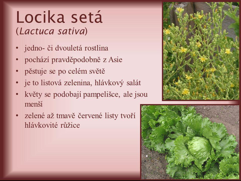 Locika setá (Lactuca sativa) jedno- či dvouletá rostlina pochází pravděpodobně z Asie pěstuje se po celém světě je to listová zelenina, hlávkový salát