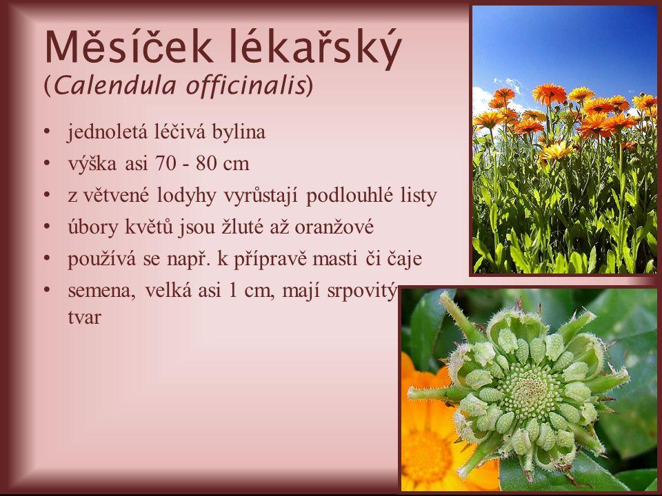 M ě sí č ek léka ř ský (Calendula officinalis) jednoletá léčivá bylina výška asi 70 - 80 cm z větvené lodyhy vyrůstají podlouhlé listy úbory květů jso