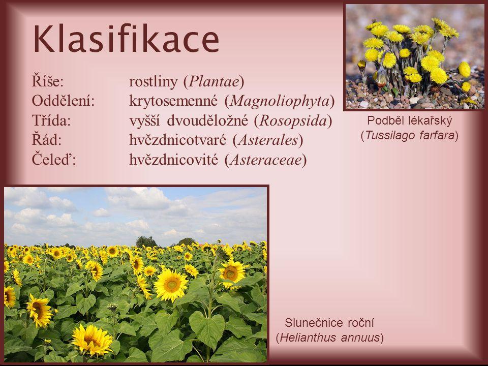 Klasifikace Říše:rostliny (Plantae) Oddělení:krytosemenné (Magnoliophyta) Třída:vyšší dvouděložné (Rosopsida) Řád:hvězdnicotvaré (Asterales) Čeleď:hvě