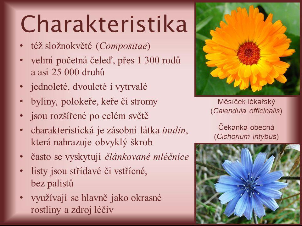 též složnokvěté (Compositae) velmi početná čeleď, přes 1 300 rodů a asi 25 000 druhů jednoleté, dvouleté i vytrvalé byliny, polokeře, keře či stromy j