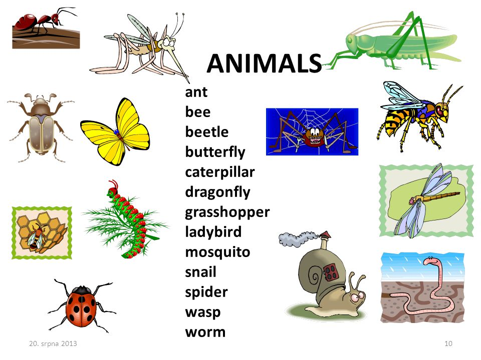 ant bee beetle butterfly caterpillar dragonfly grasshopper ladybird mosquito snail spider wasp worm ANIMALS 20.