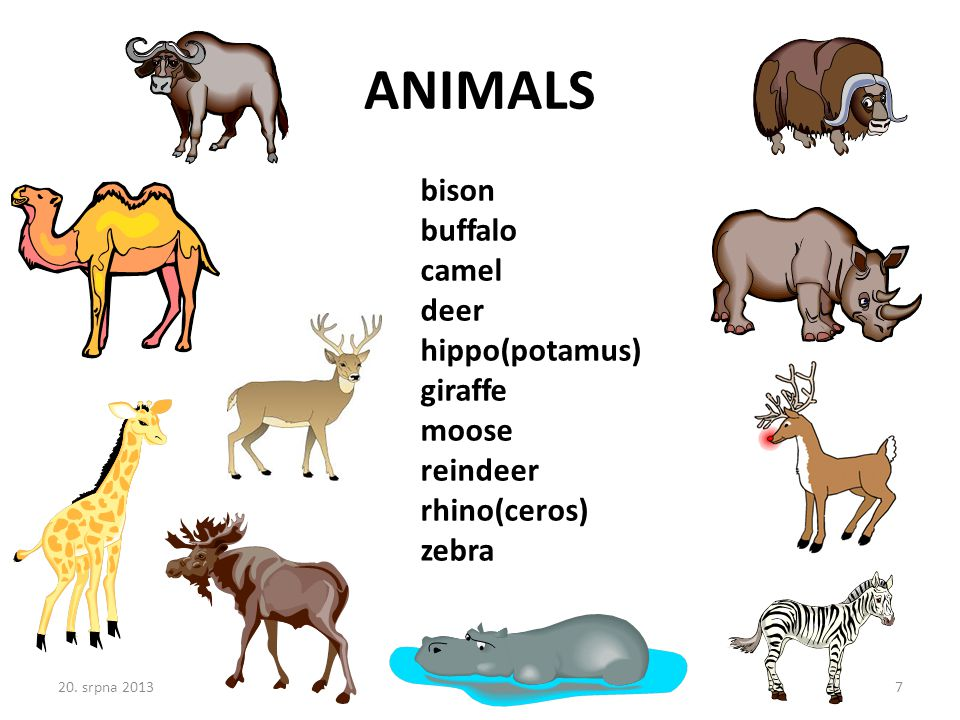 bison buffalo camel deer hippo(potamus) giraffe moose reindeer rhino(ceros) zebra ANIMALS 20.