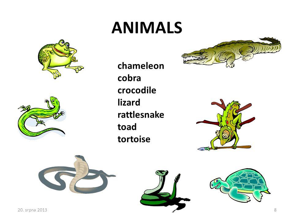 chameleon cobra crocodile lizard rattlesnake toad tortoise ANIMALS 20. srpna 20138