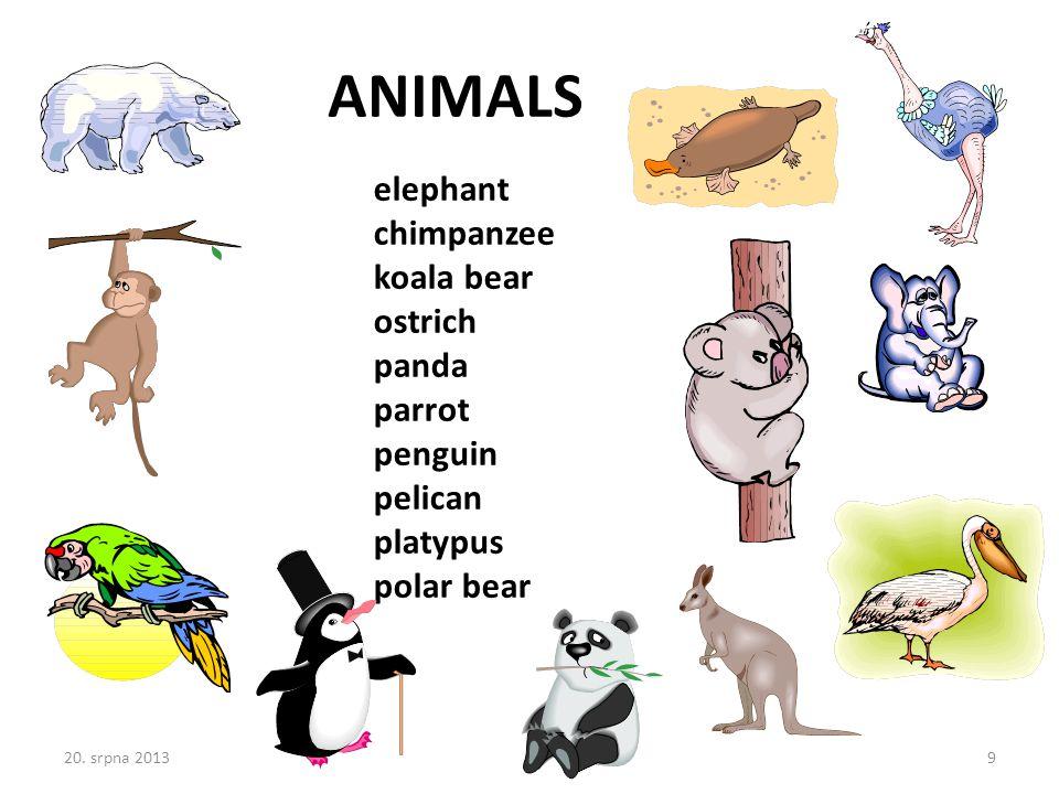 elephant chimpanzee koala bear ostrich panda parrot penguin pelican platypus polar bear ANIMALS 20.