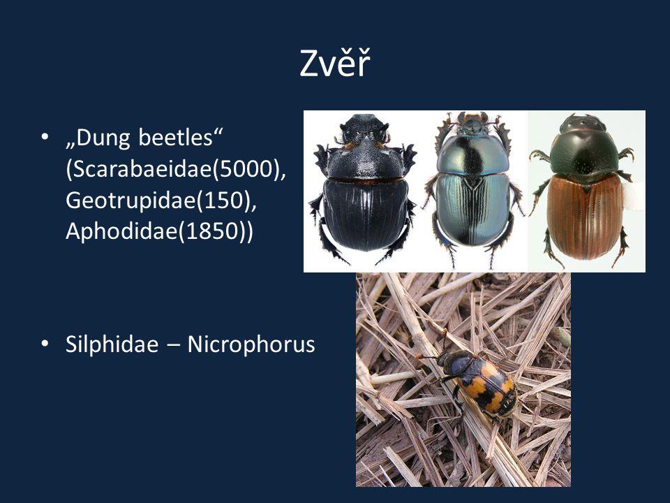 "Zvěř ""Dung beetles"" (Scarabaeidae(5000), Geotrupidae(150), Aphodidae(1850)) Silphidae – Nicrophorus"