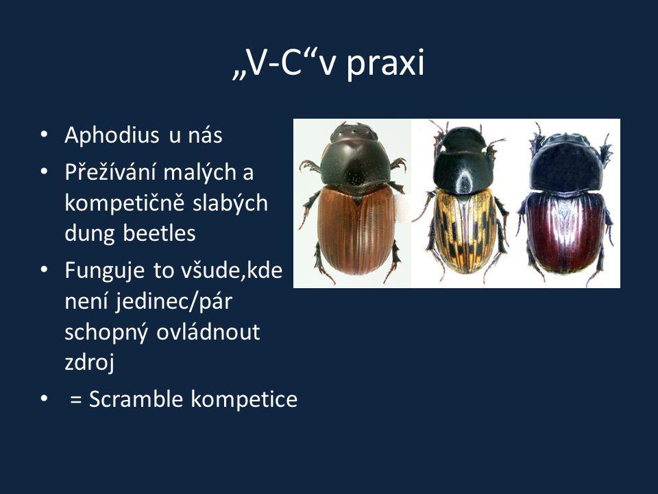 """""""V-C""""v praxi Aphodius u nás Přežívání malých a kompetičně slabých dung beetles Funguje to všude,kde není jedinec/pár schopný ovládnout zdroj = Scrambl"""