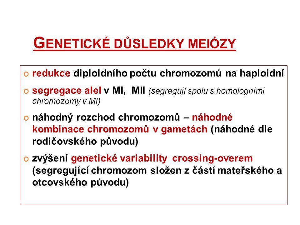 G ENETICKÉ DŮSLEDKY MEIÓZY redukce diploidního počtu chromozomů na haploidní segregace alel v MI, MII (segregují spolu s homologními chromozomy v MI)