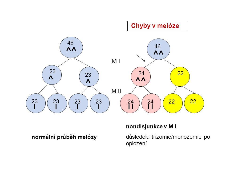 46 23 46 2422 24 22 M I M II normální průběh meiózy nondisjunkce v M I důsledek: trizomie/monozomie po oplození Chyby v meióze