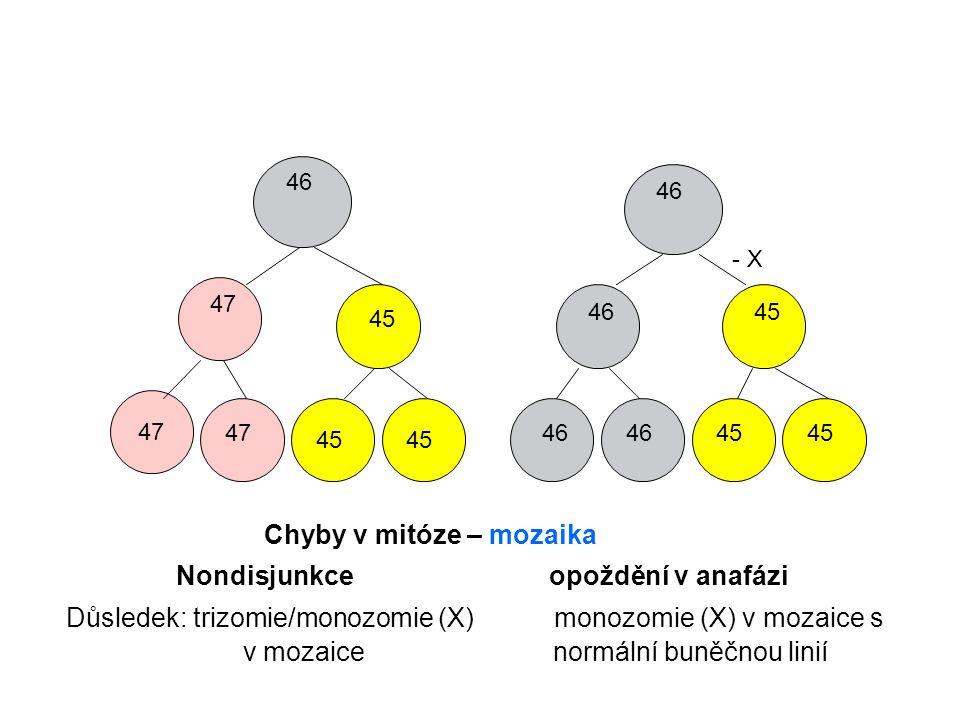 46 47 46 45 46 45 - X 45 Chyby v mitóze – mozaika Nondisjunkce opoždění v anafázi Důsledek: trizomie/monozomie (X) monozomie (X) v mozaice s v mozaice