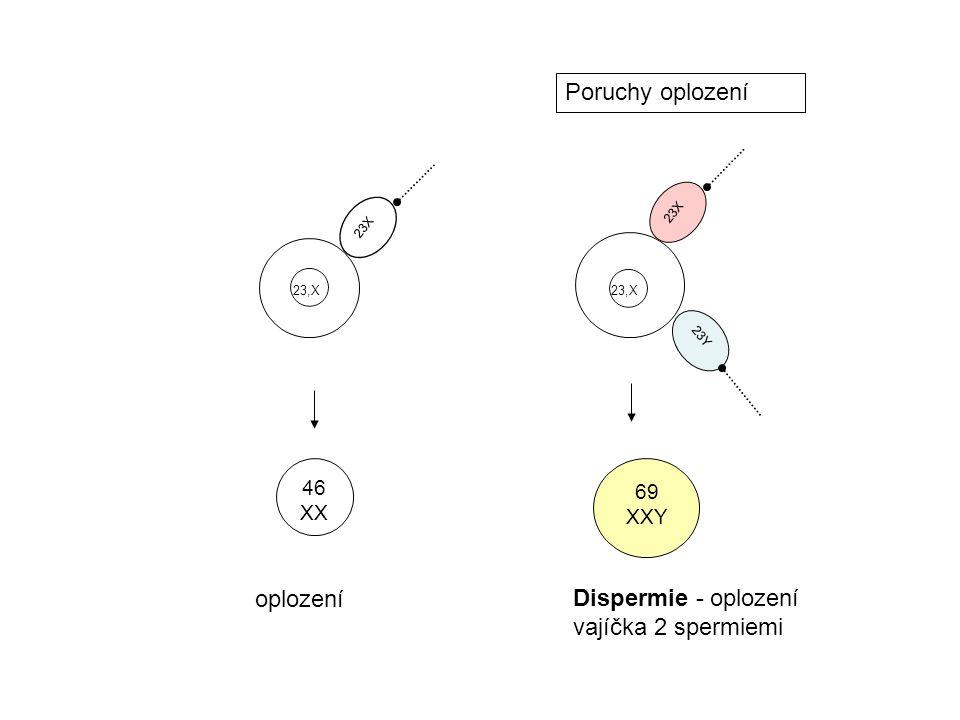 23X 23Y 23X 46 XX 69 XXY Dispermie - oplození vajíčka 2 spermiemi oplození Poruchy oplození 23,X