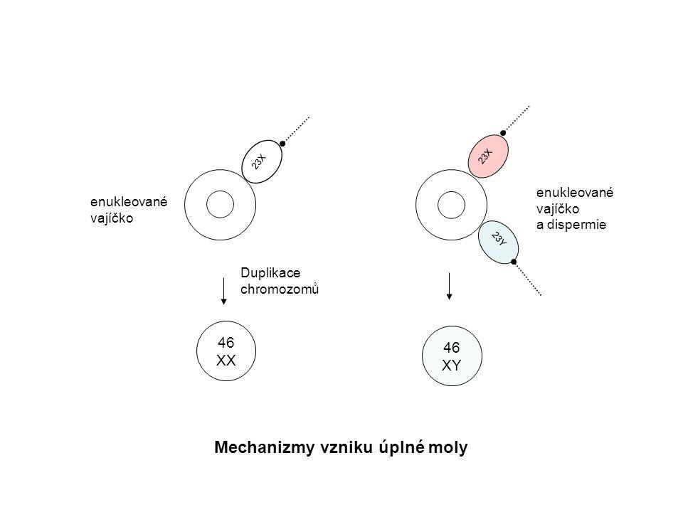23X 23Y 23X 46 XX 46 XY Mechanizmy vzniku úplné moly Duplikace chromozomů enukleované vajíčko a dispermie
