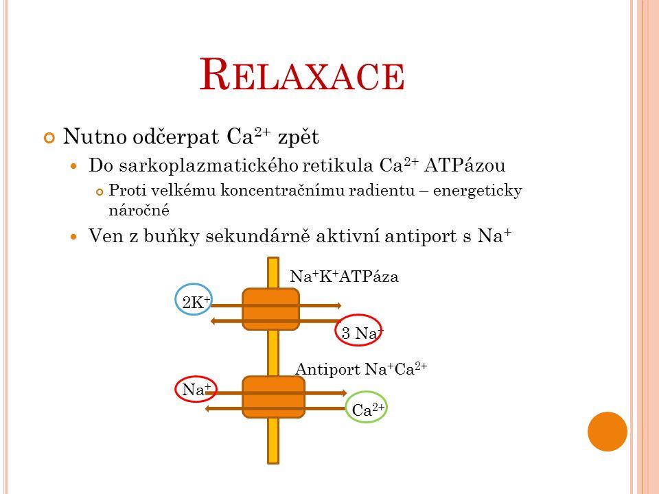 R ELAXACE Nutno odčerpat Ca 2+ zpět Do sarkoplazmatického retikula Ca 2+ ATPázou Proti velkému koncentračnímu radientu – energeticky náročné Ven z buň