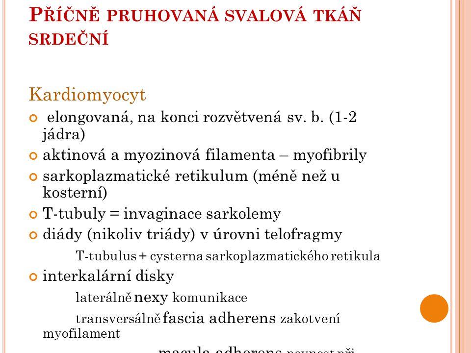 P ŘÍČNĚ PRUHOVANÁ SVALOVÁ TKÁŇ SRDEČNÍ Kardiomyocyt elongovaná, na konci rozvětvená sv.