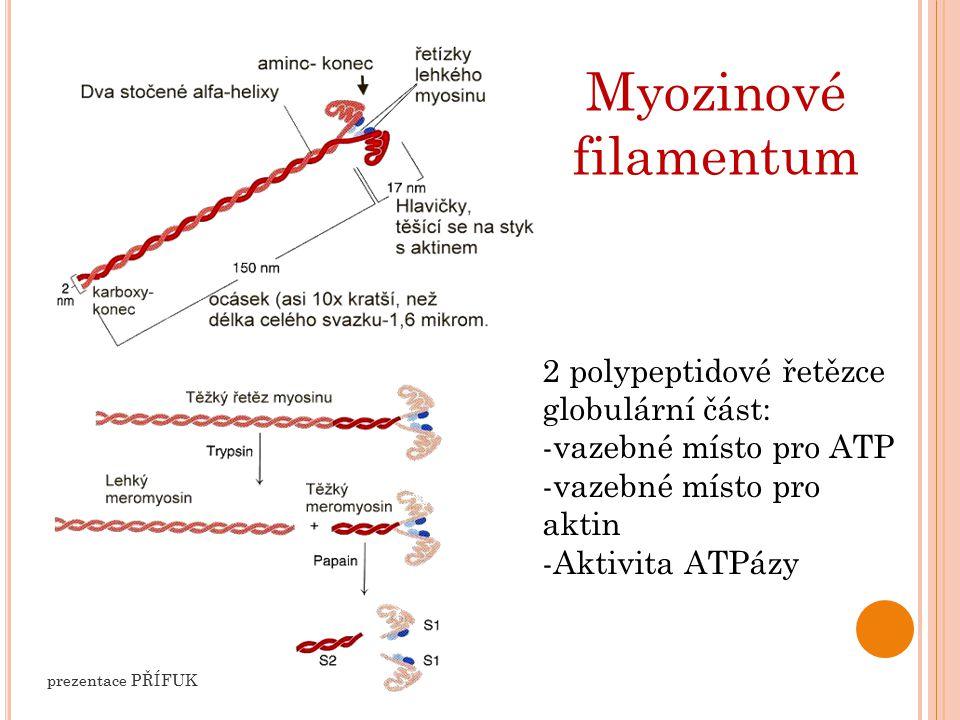 M ECHANISMUS K ONTRAKCE Navázání Ca 2+ na TnC, tím se mění struktura tenkého myofilanta – odkrytí vazebných míst pro myozin Navázání ATP na globulární část myozinu – aktivace pro připojení na aktin (zároveň s 1.) Štěpení ATP (ADP+pyrofosfát+energie) Uvolněná energie způsobí ohnutí tyčinky myozinu Navázání ATP Uvolnění vazby aktin-myosin Připraveno pro další posun