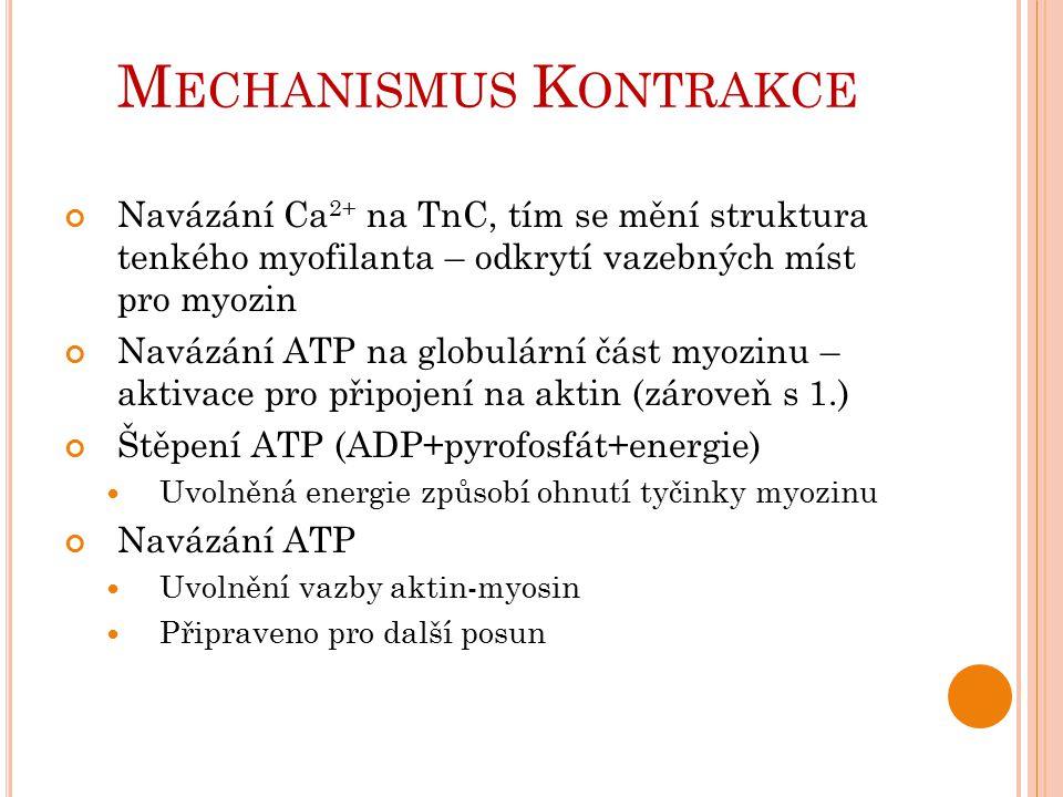 M ECHANISMUS K ONTRAKCE Navázání Ca 2+ na TnC, tím se mění struktura tenkého myofilanta – odkrytí vazebných míst pro myozin Navázání ATP na globulární