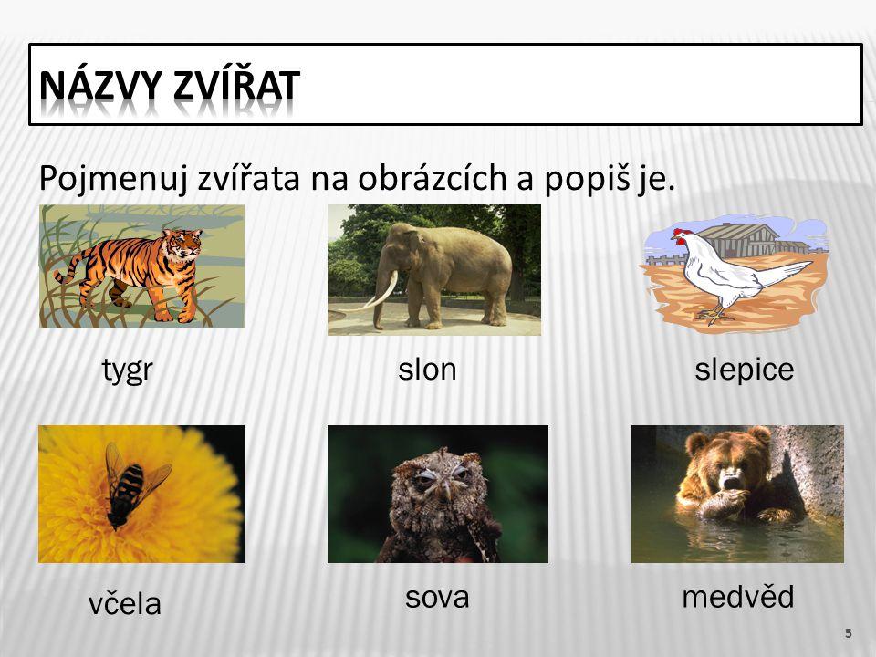 Pojmenuj zvířata na obrázcích a popiš je. 5 tygrslonslepice včela sovamedvěd