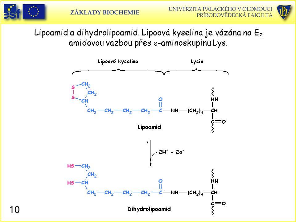 Lipoamid a dihydrolipoamid. Lipoová kyselina je vázána na E 2 amidovou vazbou přes  -aminoskupinu Lys. 10
