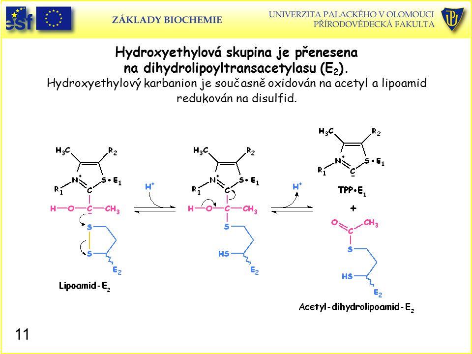 Hydroxyethylová skupina je přenesena na dihydrolipoyltransacetylasu (E 2 ). Hydroxyethylový karbanion je současně oxidován na acetyl a lipoamid reduko