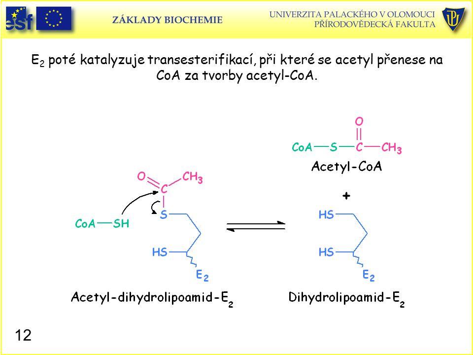 E 2 poté katalyzuje transesterifikací, při které se acetyl přenese na CoA za tvorby acetyl-CoA. 12
