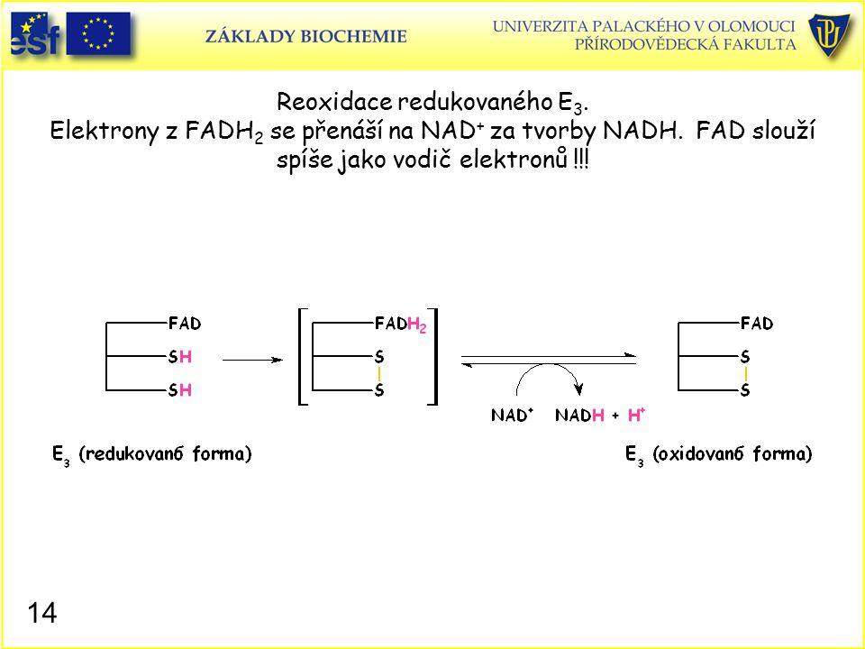 Reoxidace redukovaného E 3. Elektrony z FADH 2 se přenáší na NAD + za tvorby NADH. FAD slouží spíše jako vodič elektronů !!! 14
