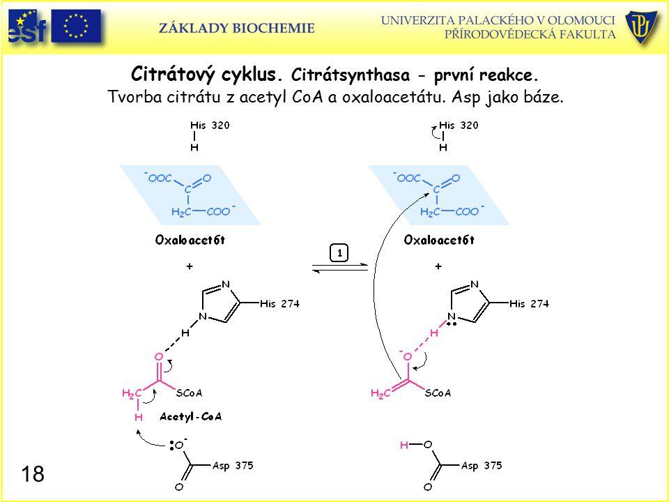 Citrátový cyklus. Citrátsynthasa - první reakce. Tvorba citrátu z acetyl CoA a oxaloacetátu. Asp jako báze. 18